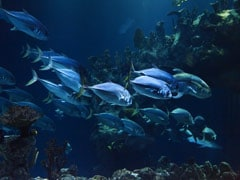 Amid Fund Crunch, Chennai Aquarium Offers Virtual Adoption Of Fish