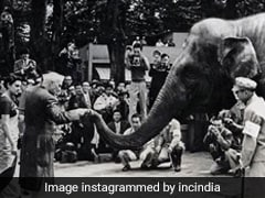 Pandit Nehru Once Got An Unusual Request From Japanese Children - Send Us An Elephant