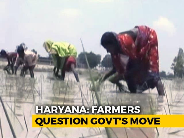 Video : Haryana Government's Incentive Scheme For Farmers Gets Lukewarm Response