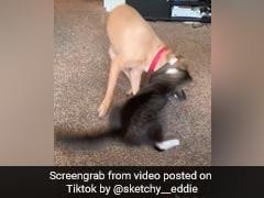 कुत्ते और बिल्ली की इस तरह की लड़ाई नहीं देखी होगी आपने पहले- देखें Video