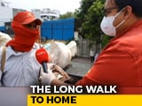 Video : From Lucknow To Chhattisgarh, The Long Walk Home
