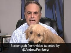 Attention-Loving Dog Interrupts Weather Report In Cutest Video Ever