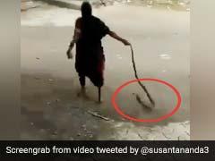 कोबरा को रस्सी की तरह पकड़ा और घसीटते हुए घर से बाहर लाकर दादी ने किया ऐसा... देखें Shocking Video