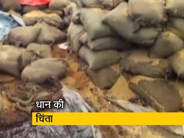 Videos : धान को बचाने में जुटी छत्तीसगढ़ सरकार