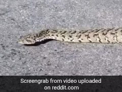 A Snake That Doesn't Slither? Viral Video Baffles Viewers