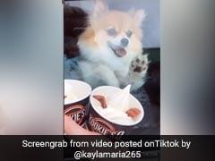आइसक्रीम को देखते ही कार में बैठे कुत्ते ने की ऐसी हरकत, Video हुआ Viral