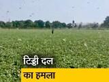 Video : मध्य प्रदेश: टिड्डियों ने बढ़ाई किसानों की चिंता