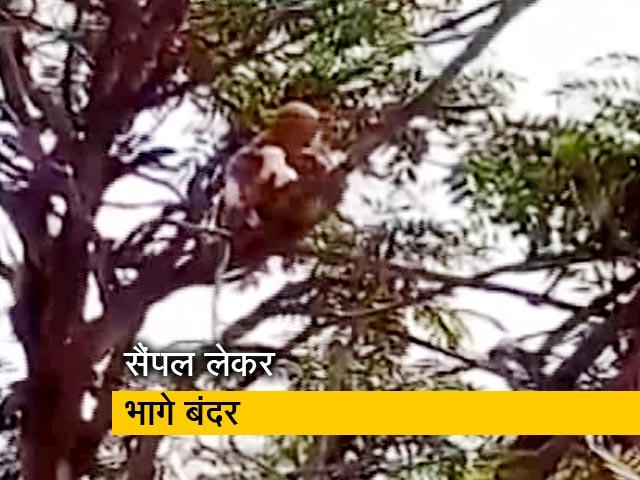 Videos : मेरठ : लैब टेक्निशियन के हाथों से टेस्ट के सैंपल लेकर भागा बंदर