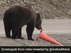 Viral Video: भालू ने दिखाई ऐसी समझदारी, बॉलीवुड एक्टर बोले- इंसान से ज्यादा समझदार...