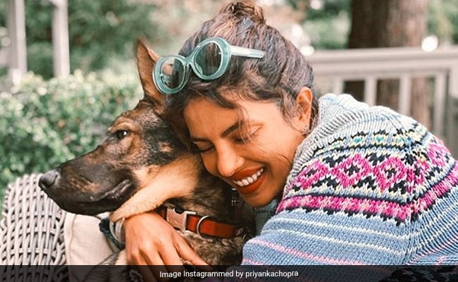 Priyanka Chopra Didn't Get The Social Distancing Memo When It Comes To This Fur-Baby