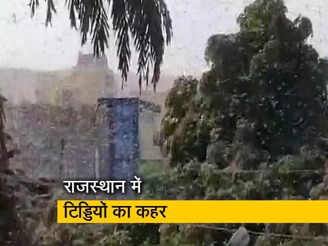 Video : राजस्थान में जयपुर से दौसा पहुंचा टिड्डियों का दल, फसलों को पहुंचा रहा है नुकसान
