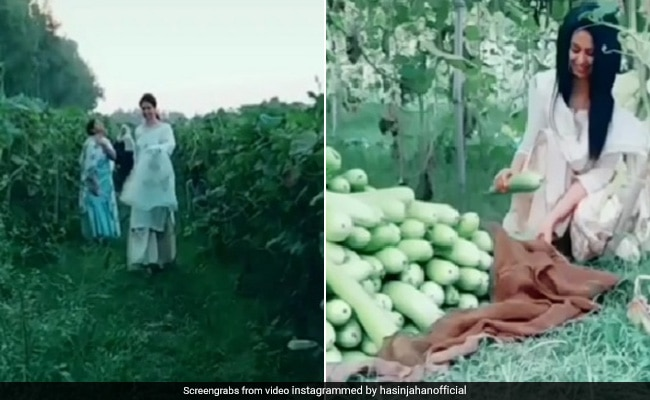 Mohammed Shami wife hasin jahan Share video from farm fans angry watch video