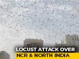 Video : What's The Reason Behind Locust Swarms In Gurgaon?