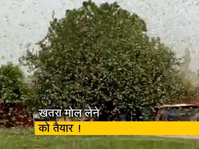 Video : सिटी एक्सप्रेस : दिल्ली-एनसीआर में टिड्डियों का हमला