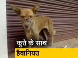 Video : कुत्ते के साथ हैवानियत मुंह पर बांधा प्लास्टिक का टेप