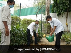 World Environment Day: Arvind Kejriwal Plants Sapling, Urges Others To Follow