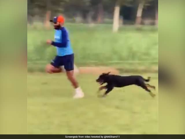 Watch: Mohammed Shami Sprints Alongside His Pet Dog To Improve Speed