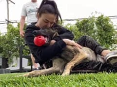 """Preity Zinta's Push-Ups Nearly """"Sabotaged"""" By Her Adorable Pet Bruno"""