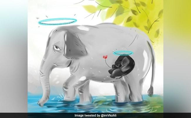 Virat Kohli emotional reaction on pregnant elephant dies after eatin cracker filled pineapple