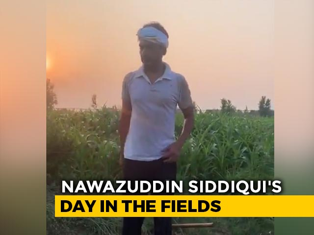 'Done For The Day': Nawazuddin Siddiqui Is Working In The Fields Of His Hometown