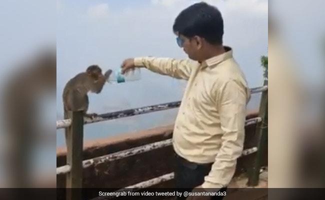 शख्स के हाथ में पानी की बोतल देख प्यासे बंदर ने रोका रास्ता, पकड़कर ऐसे गट-गट पी गया पानी... देखें Viral Video