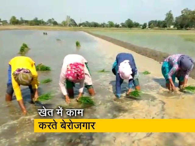 Videos : पंजाब में पढ़े-लिखे बेरोजगार बने दिहाड़ी मजदूर