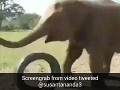 हाथी ने गाड़ी के टायर को बनाया फुटबॉल और कुछ ऐसा खेलता आया नजर, खूब देखा जा रहा Viral Video