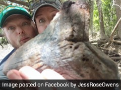 "Viral Video: Couple Finds Giant Megalodon Tooth In ""Mind-Blowing"" Discovery"