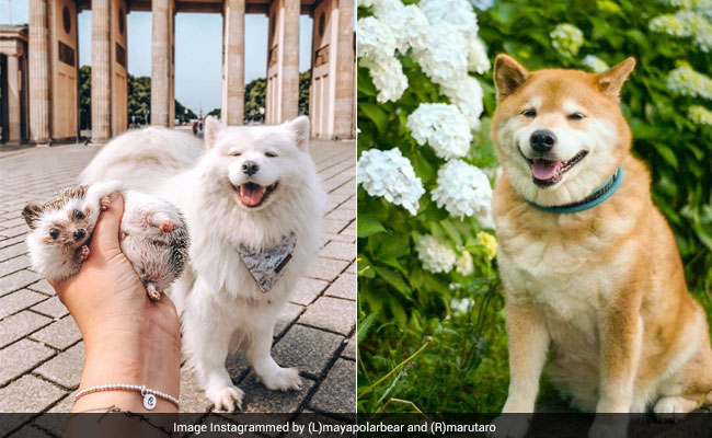Are You Following These 7 Dogs On Instagram? Here's Why You Should