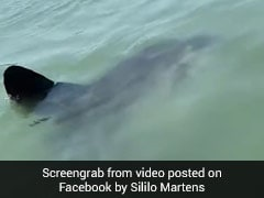 They Thought It Was A Shark Or Dolphin In Water. It Turned Out To Be...