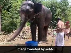 हाथी ने जान पर खेलकर बचाई शख्स की जान तो उसने हाथी के नाम कर दी अपनी करोड़ों की प्रॉपर्टी
