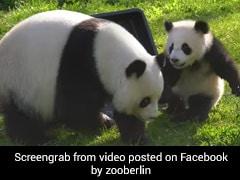 बच्चे के साथ खेलते-खेलते मां नहाने लगी तो पांडा ने फेंक दिया पानी और फिर... देखें Viral Video