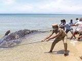 Video : Carcass Of 18-Feet-Long Whale Shark Washes Up On Tamil Nadu Beach