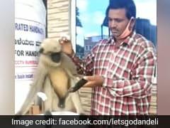 घायल बंदर इलाज के लिए हॉस्पिटल की सीढ़ी पर बैठा रहा, जब आया स्टाफ और फिर... देखें Viral Video