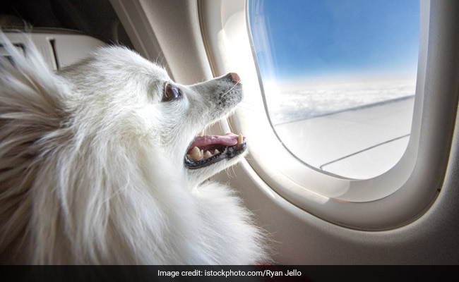 Private Jet Hired For Rs 9.06 Lakh To Fly Pets From Delhi To Mumbai