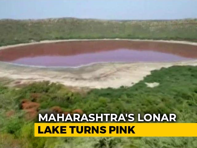Video : A Lonar Lake Turned Pink Overnight In Maharashtra. What Caused It