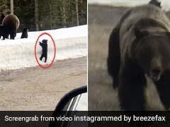 भालू के बच्चों को देखने के लिए रोकी कार तो Attack करने के लिए मां ने लगा दी दौड़ और फिर... देखें Video