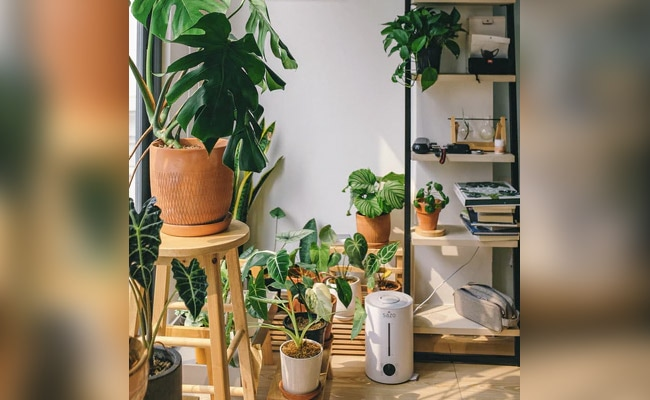 World Environment Day 2020: Purify The Air In Your House With These Indoor Plants