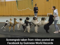 8 Dogs Come Together To Set A World Record For Conga. Watch Viral Video