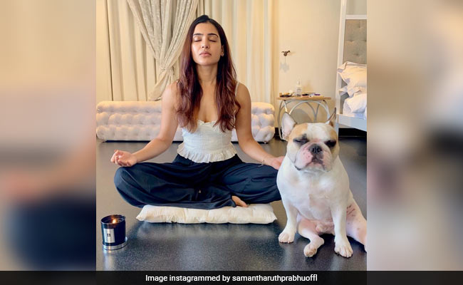 Samantha Ruth Prabhu's Meditation Partner Hash Steals The Show In This Pic