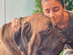 "This Pic Of Alia Bhatt With Ranbir Kapoor's Pet Dog Will ""Make Everything Better"""