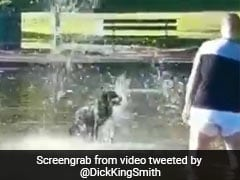 Viral: Dog Filmed Having The Best Time In Water. His Owner? Not So Much