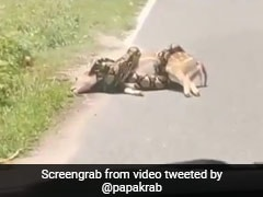 Horrifying Video Shows Python Strangling Deer. Then, This...