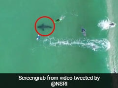 Chilling Drone Footage Shows Great White Shark Beneath Oblivious Surfers