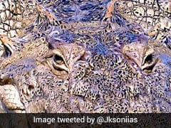 Can You Figure Out What Animal This Zoomed-In Photograph Shows?