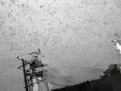 Swarms Of Desert Locusts Reach Delhi Outskirts After Gurugram