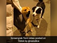 कुत्ते को देखते ही भौंकने लगा दूसरा कुत्ता, तो पकड़ा मालिक का पैर और फिर... 70 लाख से ज्यादा बार देखा गया Video