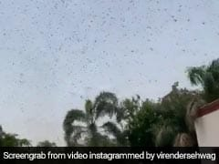 "Virender Sehwag Shares Video Of Swarms Of Locusts ""Right Above The House"". Watch"
