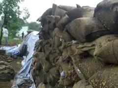 शिवराज सरकार ने गेहूं खरीद में किया है रिकॉर्ड बनाने का दावा, लेकिन अधिकारियों की लापरवाही से सड़ गया सैकड़ों क्विंटल गेहूं