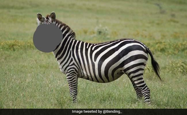 चेहरा छिपाकर शख्स ने पूछा - कौन है यह जानवर? लोगों ने दिए लोट-पोट कर देने वाले अजीबोगरीब जवाब